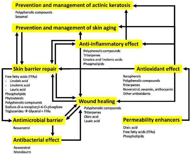 Oversigt-over-planteoliers-egenskaber-på-huden-Anti-Inflammatorisk-og-reperation