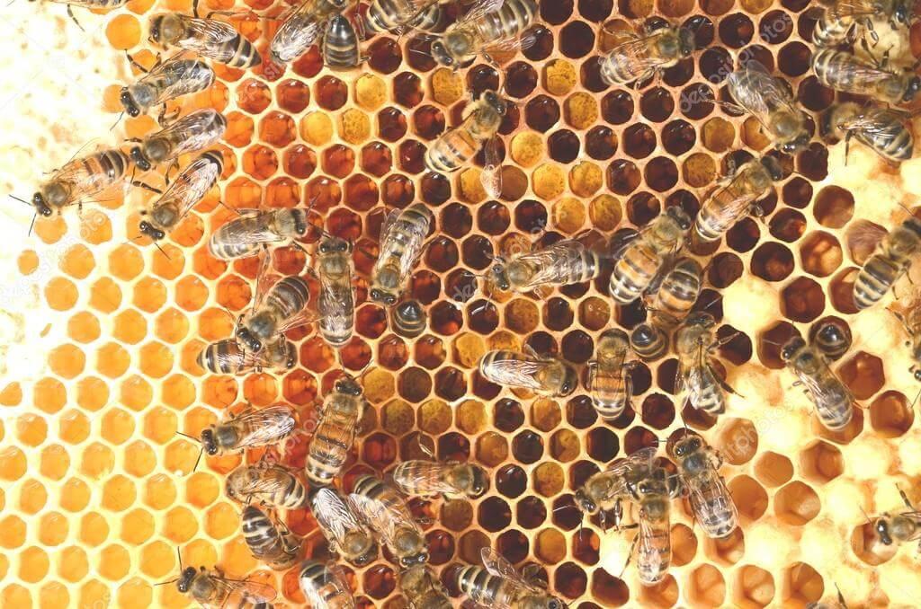 honningtavle
